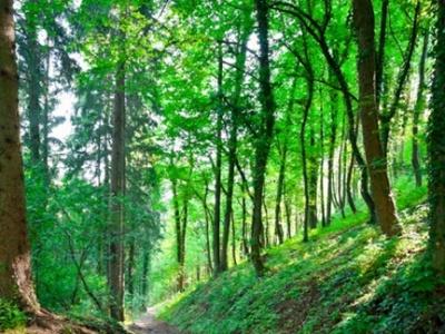 Plimbarea în natură